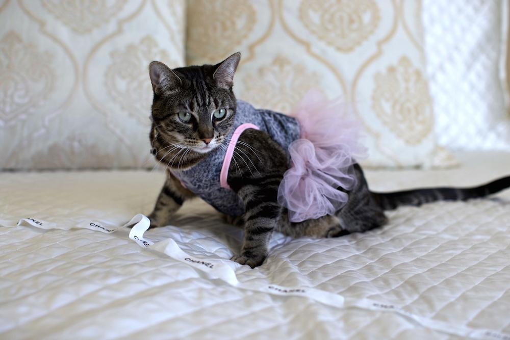 chanel_cat